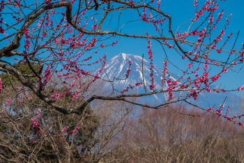 富士山と-3.jpg