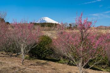 富士山と.jpg